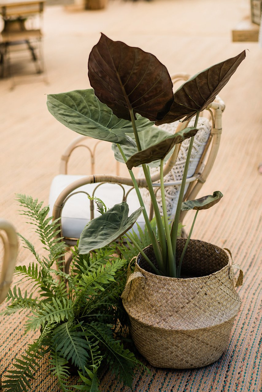 Potted plants as wedding styling - Green Styling - Image by On Janzen